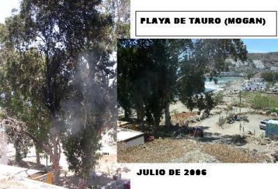 20060719144533-arboricidio-tauro-mini.jpg
