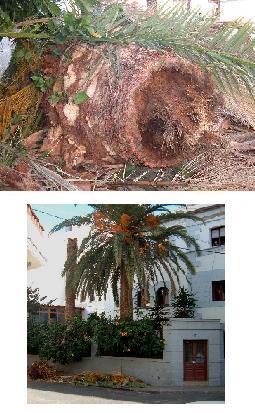 20070122115106-palmera-terrero-mini.jpg