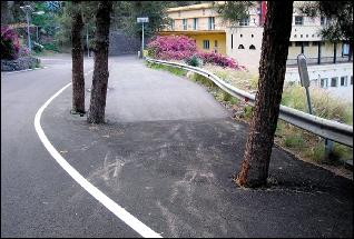 20080212184805-troncos.jpg