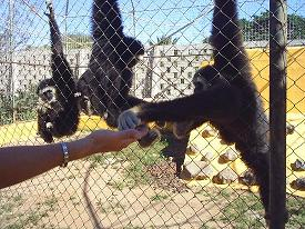 20080708233455-tenerife-zoo-monkey-park.jpg