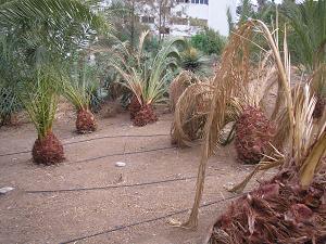 20080926214947-palmeras-mini.jpg