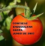 20051213144049-tomatito.jpg