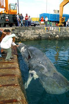 20060402105220-ballena-puerto-del-rosario.jpg