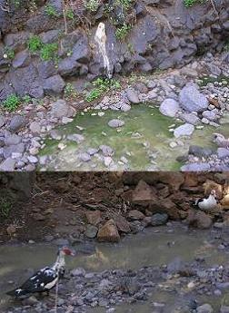 20070223223628-aguas-fecales-mini.jpg