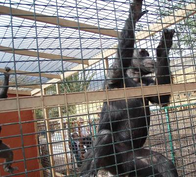 20100323181143-cocodrilos-park-mini.jpg