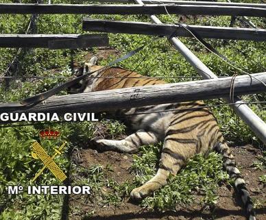 20100325125508-tigre1.jpg