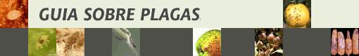 plagas_GUIA.jpg